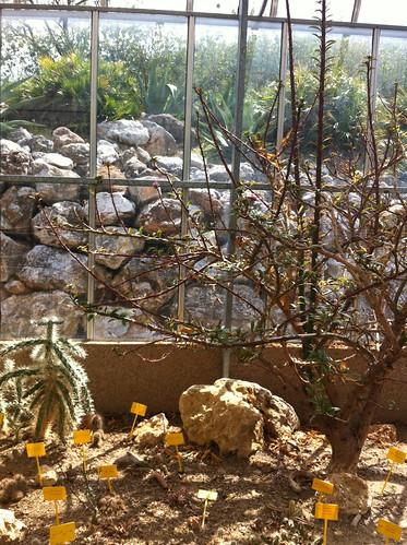 Jardín Botánico de Cactus y Suculentas Mora yi Bravand