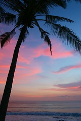 Palm Tree Sunset (brianfarrell) Tags: ocean sea bali indonesia relax march surf peace lot wave serene relaxed tranquil tanahlot tanah 2013