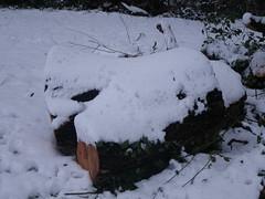 snow march 020 (sonya.britton) Tags: snow hill stump tamworth stonydelph