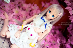 DSC01790 () Tags: dolls custom volks menma dollfiedream anohana meikohonma