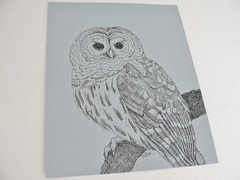 Barred Owl ink drawing by Mary Richmond (mbrichmond) Tags: originalart inkdrawing barredowl owldrawing owlart owlillustration maryrichmond