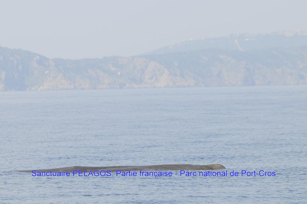 sortie 30 05 2012 213