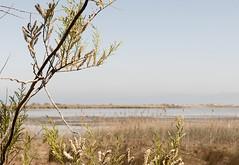 delta001 (__JML__) Tags: naturaleza nature water rio river agua nikon delta natura catalonia silence catalunya ebro aigua catalua silencio riu silenci deltebre ebre jml rememberthatmomentlevel1