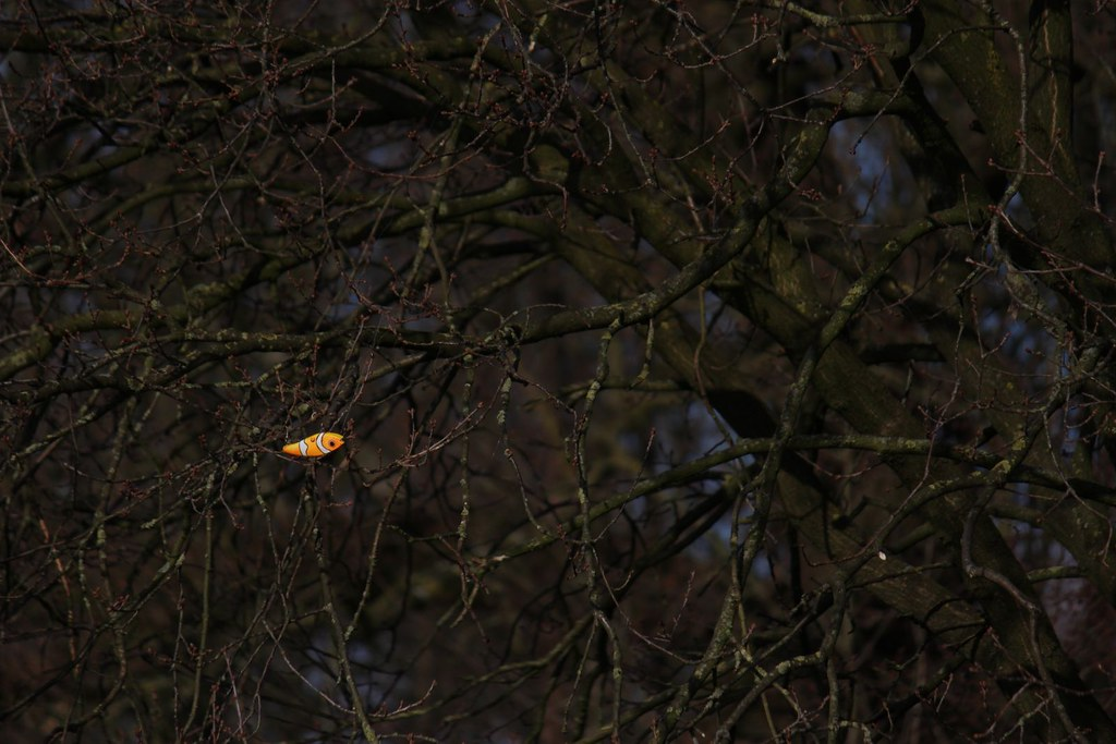 The world 39 s best photos of branches and entangled flickr for Fish branch tree farm