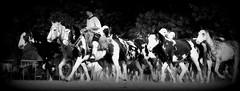 Los Overos de Areco (Eduardo Amorim) Tags: gacho gachos gaucho gauchos campeiro campeiros campero camperos cavalos caballos horses chevaux cavalli pferde caballo horse cheval cavallo pferd tropilhas tropilla tropillas crioulo criollo crioulos criollos cavalocrioulo cavaloscrioulos caballocriollo caballoscriollos sanantoniodeareco provinciadebuenosaires tropilha herd troupeau gregge herde paniolo yara pampa pampaargentino pampaargentina argentina sudamrica sdamerika suramrica amricadosul southamerica amriquedusud americameridionale amricadelsur americadelsud cavalo         hst hest hevonen  areco eduardoamorim