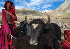 Wakhi nomad women with yaks, Big pamir, Wakhan, Afghanistan (Eric Lafforgue) Tags: adultsonly afghan213 afghanistan altitude animal anthropolgy badakhshan bigpamir bosgrunniens centralasia colourimage community cultures day headscarf horizontal horned indigenousculture ismaili landscape lifestyles livestock lookingatcamera malongzan mountain mountainrange nature nomad nomadicpeople outdoors pamirmountains people photography red scenery tourism traditionalclothing transportation traveldestinations twopeople veil wakhancorridor wakhi wilderness women womenonly workinganimals yak wakhan pamir