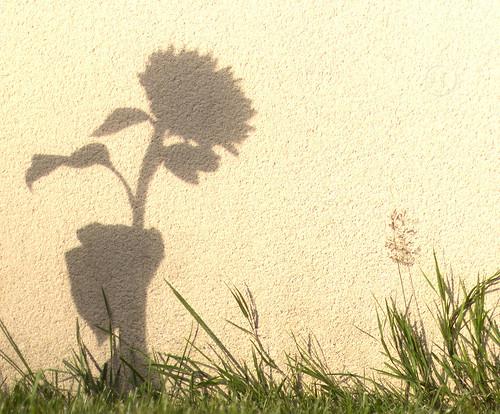 S'ombre lumière ...