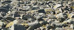Boulder field near Kemijarvi lapland Finland (David Russell UK) Tags: kemijarvi lapland finland travel rock rocks formation bolder boulder bolders boulders geological ice age glacier melt outdoor