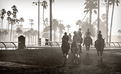 Los Alamitos Race Track 8.12.16 13 (Marcie Gonzalez) Tags: racehorse racehorses race horse horses track racing racer ride rider sport event fast run running round southern california calif ca usa us north america sports practice training los alamitos