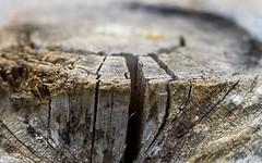 wooden textures (Florian Grundstein) Tags: wood wooden tree texture holz baum stamm texturen struktur risse dof schrfentiefe bokeh mft olympus em1 omd microfourthird freistellen grundstein florian