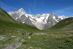 Monte bianco e les Grandes Jorasses (mimu81) Tags: valdaosta altavia1 mountains alps alpi trekking hiking italy valferret montebianco montblanc snow white ice glacier