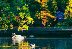 Lady in waiting (Steve-h) Tags: park nature natur natura naturaleza foliage candid lady woman birds swan ducks pond water reflections autumn fall colour colours bench orange gold yellow green blue shadows leaves leaf ststephensgreen dublin ireland europe ef eos canon camera lens digital exposure steveh