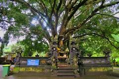 Pura Tirta Empul (JaNuchjarin) Tags: puratirta pura tirta empul bali indonesia tree nature