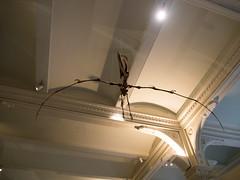 Pterosaur skulls (Yuxuan.fishy.Wang) Tags: americanmuseumofnaturalhistory amnh dinosaur museum pterosaur skull newyork unitedstates us