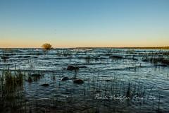 20160828-IMG_7742-WM (Pamela McLellan Zmija) Tags: saugeenshores portelgin sunset beach lakehuron goblesgrove sunshine pamelamclellanzmija