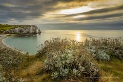 Sunset  tretat (Gilles Bourdreux Photographie) Tags: europe france normandie plage tretat arche aiguille creuse sunset sun ciel mer seascape fleurs jaune falaise