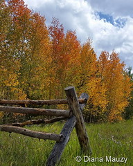 September 3, 2016 - Fall colors arrving near Granby.  (Diana Mauzy)