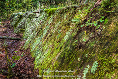 Moss in Wild Horse Canyon (Jeff Beer Photography) Tags: moss reindeermoss lichen woods forest spiders webs