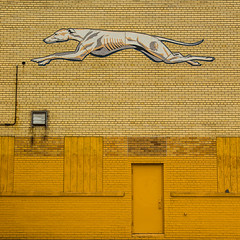 Hound. (yeahwotever) Tags: abandoned building derelict detroit factory packard plant station greyhound racer dog track lurcher mutt pooch yellow wall door graphic boarded up garage pacman vent brick stretcher bond