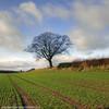 Stand Alone Tree - Cardeston (Daveyboy_75) Tags: tree shropshire olympus shrewsbury fields hdr singletree lonelytree rowton tractortracks lonesometree standalonetree e450 cardeston a485 a485welshpoolroad welshpoolroad