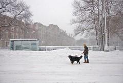 Mass Ave (mush!) (iMatthew) Tags: snow boston nemo mush snowstorm backbay massave adudehisdog dogsdigsnow