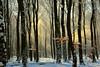 wintry-forest (Don Pedro de Carrion de los Condes !) Tags: trees winter sun bomen dancing wind details sneeuw bos wit veluwe zonlicht koud donpedro sneeuwvlokken garderen kleuren ermelo sfeer sneeuwval woud toerisme sfeervol lichtharp speuld wintertooi briesje
