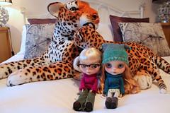 323/365 Leopard love!