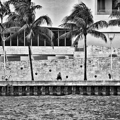 Waiting (EXPLORED) (The secret life of Mister Blur) Tags: blackandwhite bw blancoynegro nikon waiting downtown florida miami financialdistrict d60 bythesea snapseed misterblur