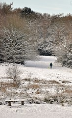 9076 (benbobjr) Tags: park uk trees winter england snow tree ice forest bench frozen birmingham chair frost unitedkingdom path seat suttoncoldfield naturereserve footpath westmidlands sutton birminghamuk bridleway midlands suttonpark publicfootpath urbanpark royalforest royaltown