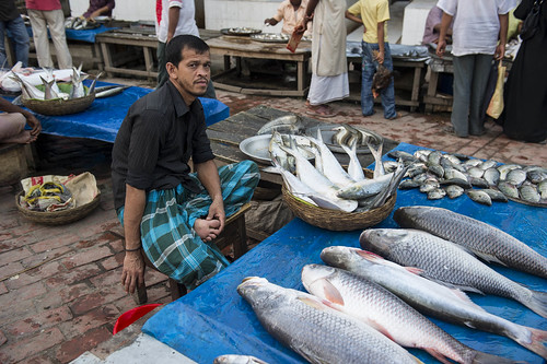 A fish seller at a fish market in Barisal, Bangladesh. Photo by Finn Thilsted, 2012.