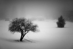 Cold & Lonely (Gabriel Tompkins) Tags: trees winter blackandwhite bw usa snow cold monochrome field fog washington flora nikon spokane pacificnorthwest limbs nikkor washingtonstate pnw 18105 d90 spokanevalley 2013 inlandnorthwest 18105mm nikond90 18105mmf3556gvr tronam gabrieltompkins
