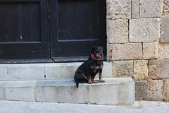 Sit. Good Dog. (NM Flower Girl) Tags: dog greece blackdog rodos rhodes grandmasterpalace