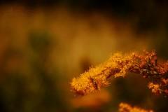 Otoño (-Ana Lía-) Tags: flowers naturaleza color sol nature argentina flickr flor vida otoño amistad jardín fotografía aprehendiz rememberthatmomentlevel1