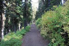 on the Mt. Misery Trail (fly flipper) Tags: bluemountains mtmisery asotincounty umatillanationalforest mtmiserytrail