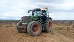 0005VIÑEDOS-plantar-injertos-(22-3-2013)-P1020007 (fotoisiegas) Tags: viticultura viñas viñedos cariñena plantar injertos fotoisiegas lospajeras