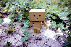 Danbo (BelladonaGarmog Doll's) Tags: toy toys photo figure danbo danboard panasonicdmcgh2 belladonagarmog