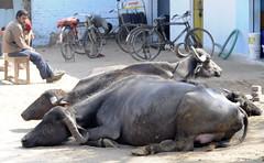 Khajuraho (nicnac1000) Tags: india mp khajuraho madhyapradesh bundelkhand chhatarpur