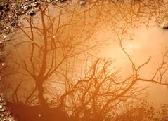 Reflejos (E.Barcos) Tags: park parque autumn trees naturaleza nature mystery forest reflections sadness tristeza pond arboles bosque otoo reflejos misterio charco
