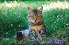 NINJA (mutter2009 *OFF*) Tags: ninja moggy naturesfinest coth supershot golddragon abigfave nikond80 kittysuperstar bestofcats kittyschoice catnipaddicts alittlebeauty lovely~lovelyphoto coth5 vg~catsgallery sunrays5
