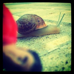 Uh? (Santiaggs) Tags: nature square miniature photo cityscapes snail squareformat caragol iphoneography instagramapp xproii uploaded:by=instagram