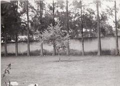 IMG_0016 (a.scottcasas) Tags: family white black history kids portraits vintage children photography spain san sebastian havana cuba 1940 celaya 1900 restoration 1970 1910 slides casas 1950 1920 1930 1960 1891 restorations