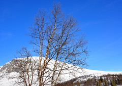 The mountain Skogshorn in March (Lykkja, Hemsedal, Norway) (Terje Hheim (thaheim)) Tags: winter mountain norway outdoors nikon day tranquility clear majestic scenics clearsky natue hemsedal d90 beautyinnature 18200mmf3556gvr skogshorn lykkja tranquilscene pwwinter