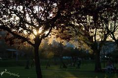 Sun set behind tree (fubespu) Tags: sunset portugal mirandela pentaxk30