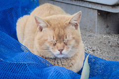 Today's Cat@2013-04-16 (masatsu) Tags: cat canon catspotting thebiggestgroupwithonlycats powershots95