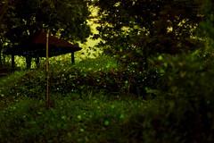 Startrails~3   Sleepless in night.. (michaeliao27) Tags: