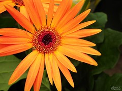 0~0 (Adriano S Redigolo) Tags: flowers friends paisajes flores flower macro art nature floral fleur colors beautiful beauty yellow closeup fleurs garden photography photo petals flora flickr purple image blossom details flor group bordeaux favorites imagens award ground master your linda fotos jardim views vista grupo flowering fiori capture fiore quintaflor comments pequena paisagens amarela membro detalhes fleures flors flori hermosas premia petalas redlady supershot fantasticflower fantasticnature frenteafrente flowersarebeautiful visualizar excellentsflowers natureselegantshots vosplusbellesphotos flickrflorescloseupmacros fleursetpaysages colorsback