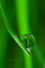 A new day,a new hope (saha_n) Tags: morning france macro green beautiful dewdrops spring newhope morningdew nikond90 dewrefraction winterned