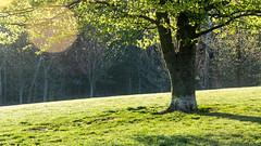 First Light (David G Ruth) Tags: park dog sunrise spring nikon ky hill louisville cherokee d3200