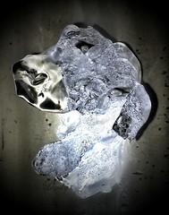 Cool Dog (rhonda_lansky) Tags: dog art ice water frozen cool profile surreal canine fantasy unreal poems frozenwater icecube shortstories meltingice iceart coldart cooldog lansky iceportrait rhondalansky aurorarose1stgmailcom