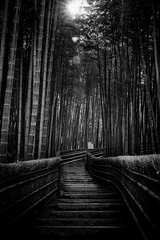 Arashiyama bamboo forest (Pierre Pichot) Tags: arashiyama bamboo beautiful canon flare forest green japan kyoto nature path peace stairs sun tranquility travel trees dark shadows blackwhite blackandwhite black white monochrome